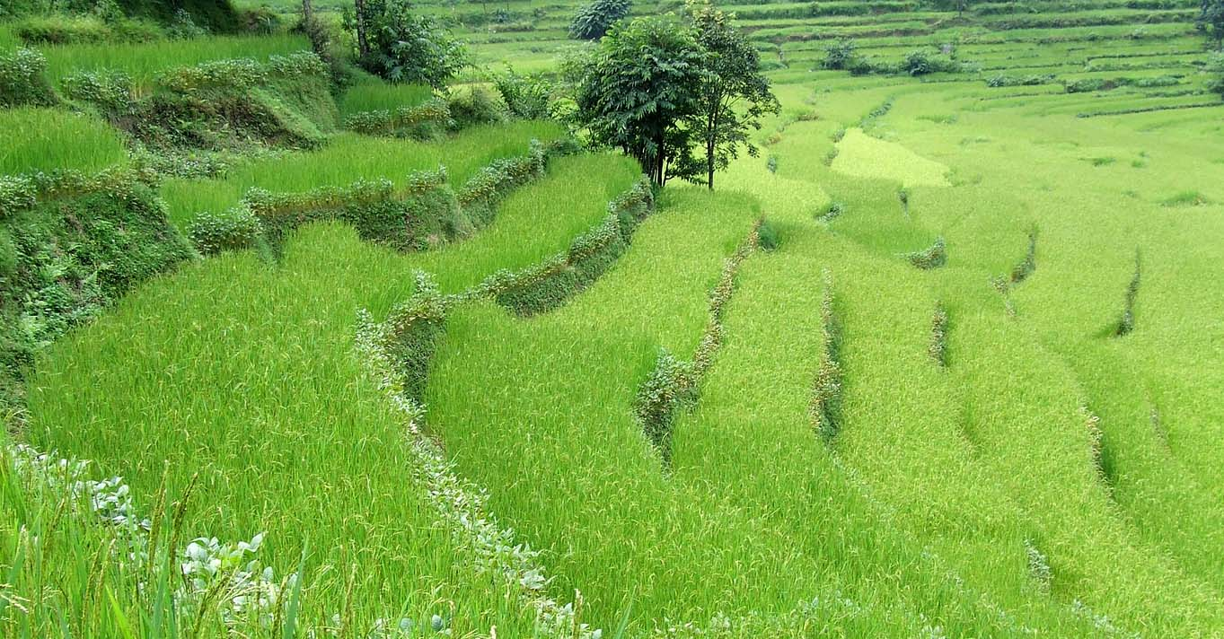 Terrance-Farming-Nepal